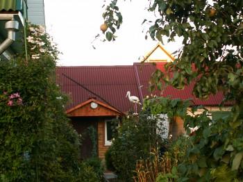 Аист на крыше